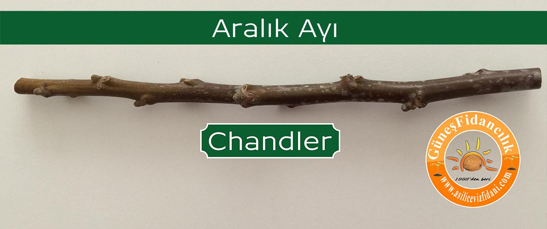 chandler-ayrim